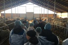 25.10.2017 Ettevõtete külastuse päev ühistulise kogemuse vahendamiseks veisekasvatuses